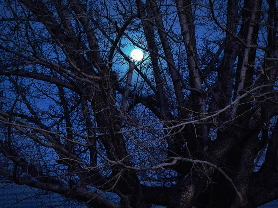 moon through tree branches