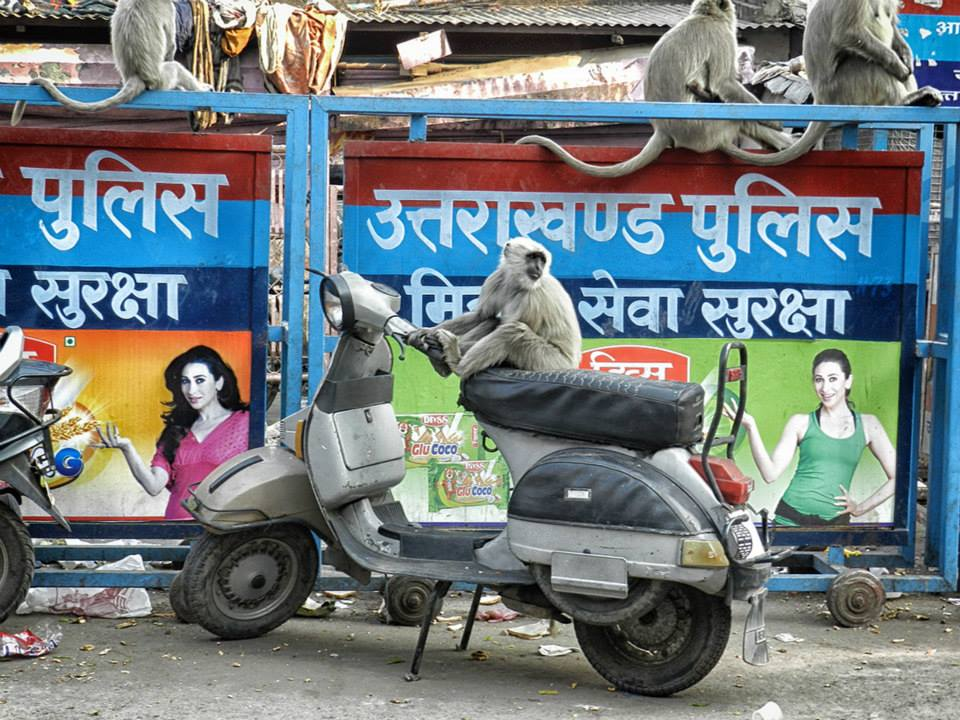 Monkey sits on scooter in Haridwar