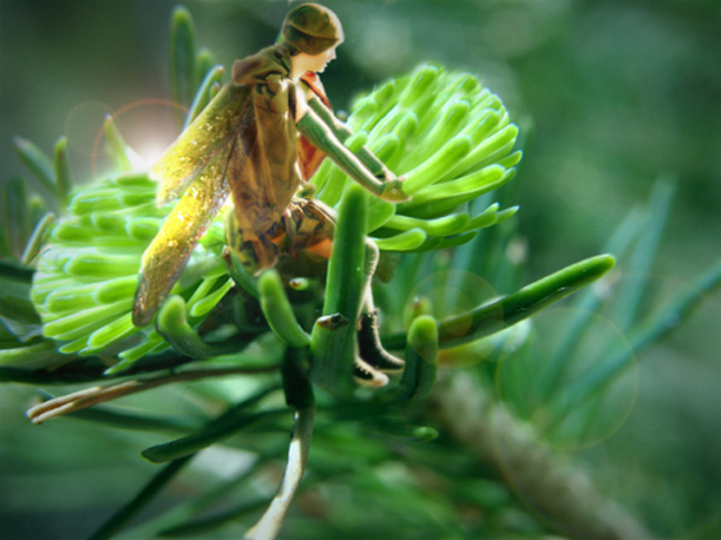 digital image of small fairy sitting in pine tree