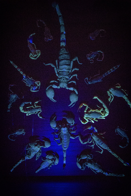 glowing scorpions in case meow wolf