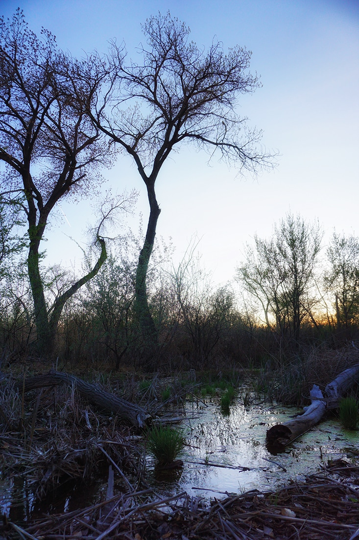bosque trees and water reflecting sunset