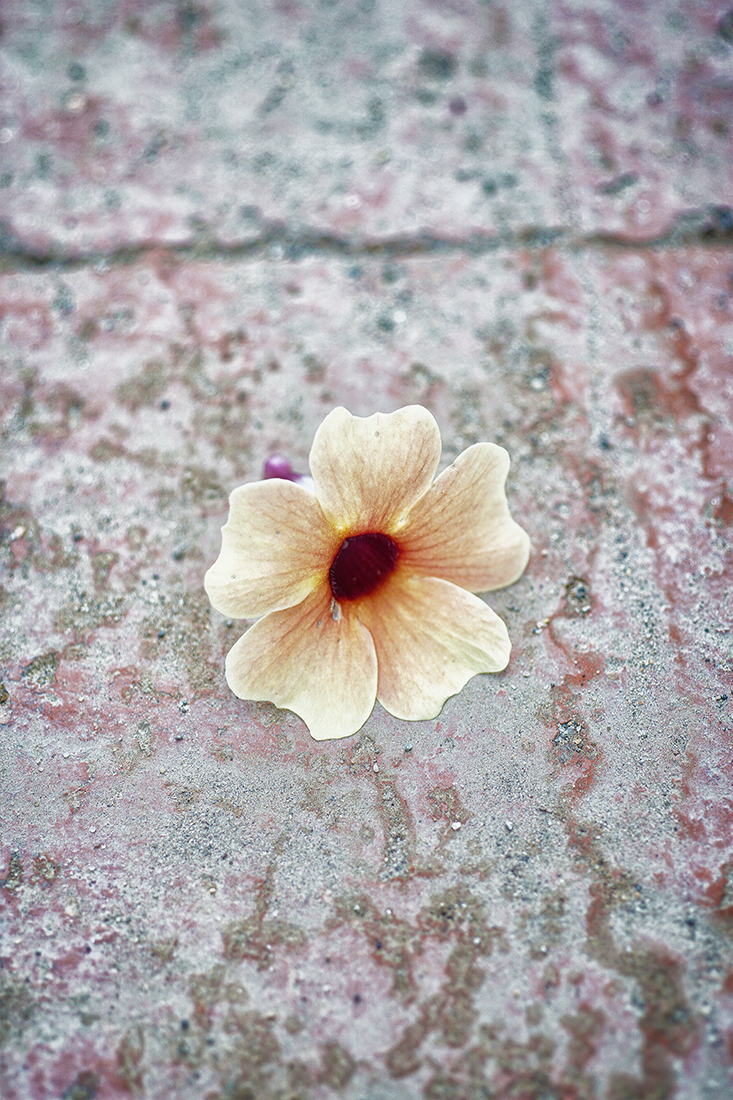peach colored flower on salt stained concrete