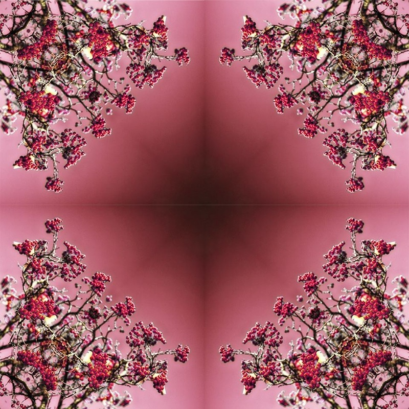 red berries red sky kaleidoscope