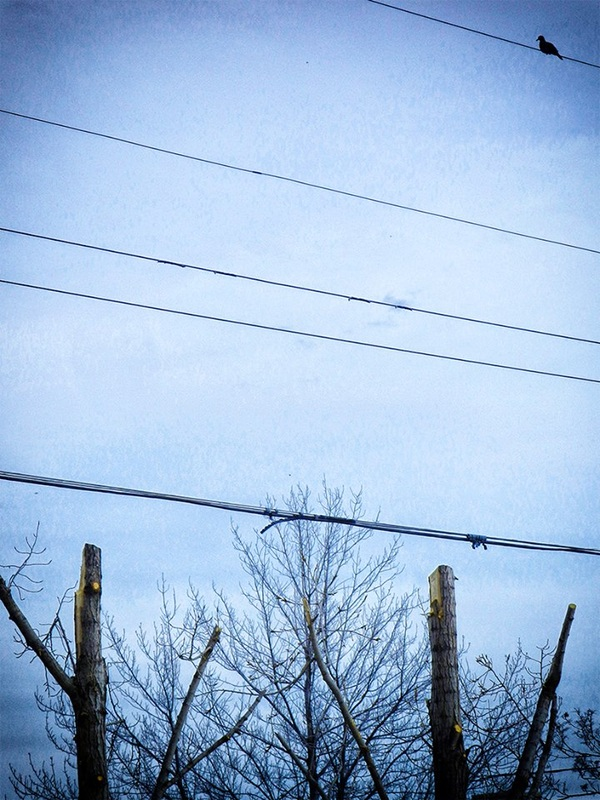 bird on wire after trees cut down