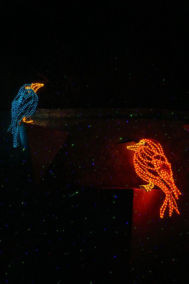 Light Birds enjoying the Laser Snow
