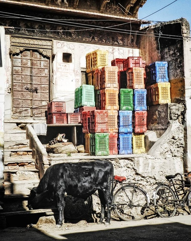 many colored plastic crates stacked against building with black cow in foreground