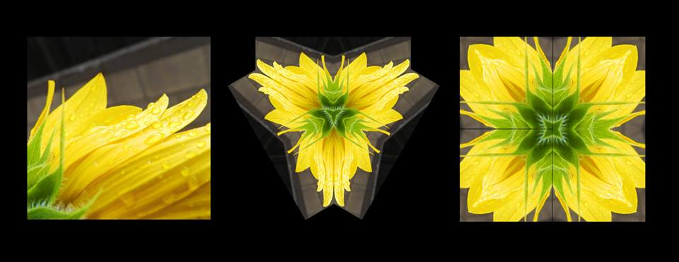 image of sunflower, and others made with the image