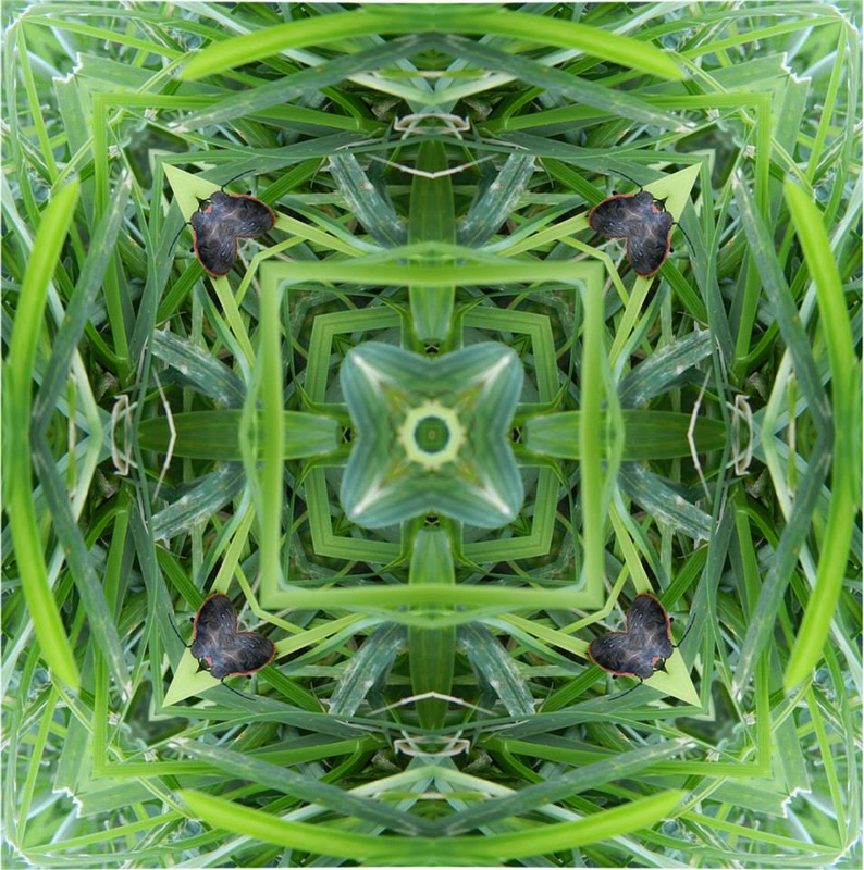 grass and beetle yantra