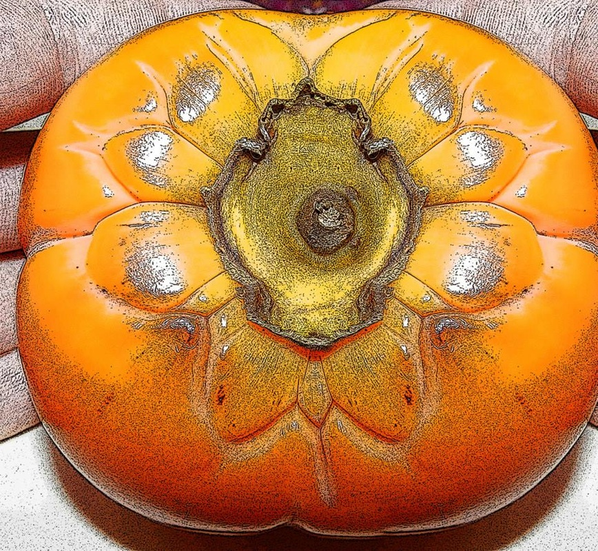 photo of persimmon stylized to look like a drawing