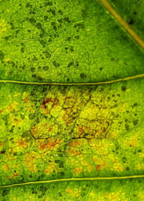 pattern in leaf
