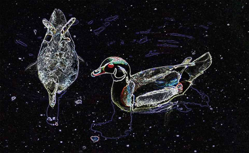 wood ducks, drawn in glowing lines