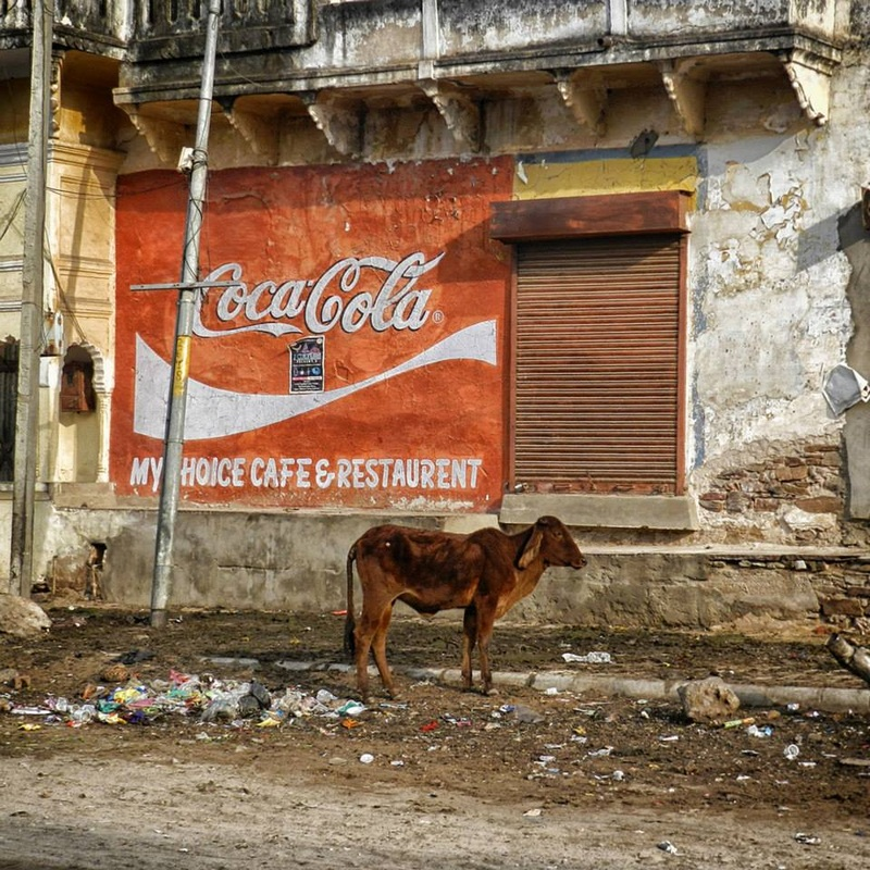 cow and trash in front of large painted coca cola advertisement