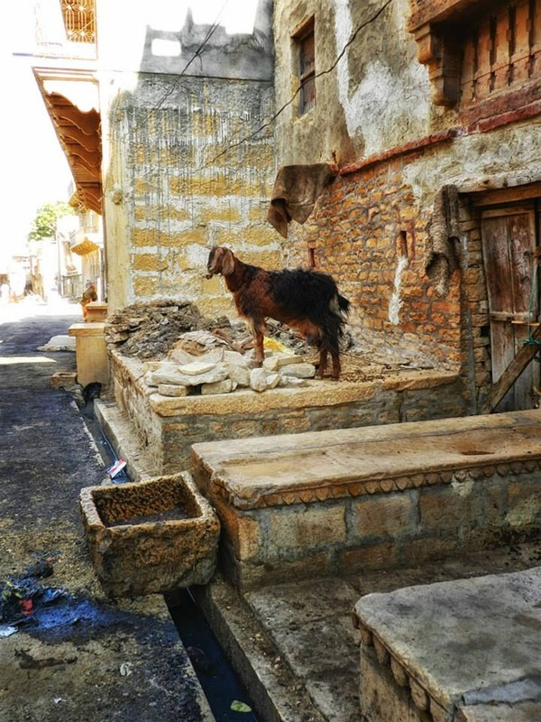 goat stands near doorway