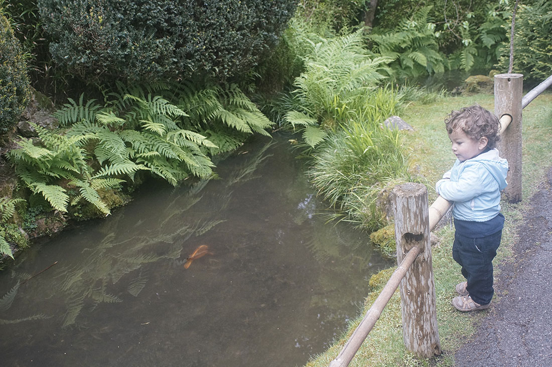 child looks at koi pond Japanese Tea Garden