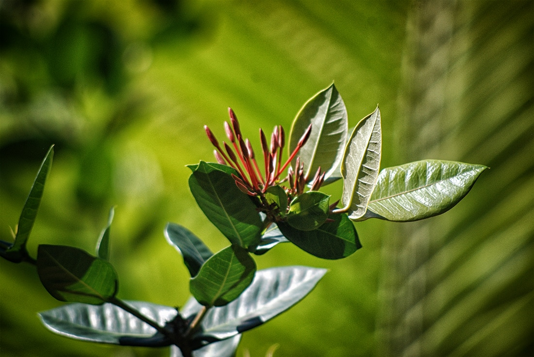 tropical plant with blooms