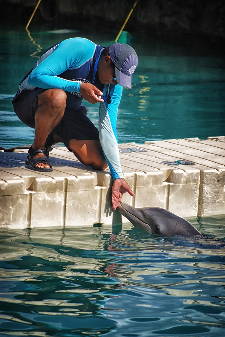 dolphin with trainer, Costa Maya