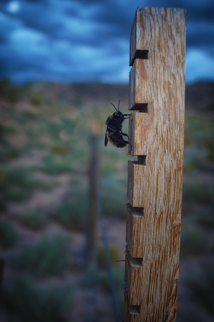 big bee on fence post in desert