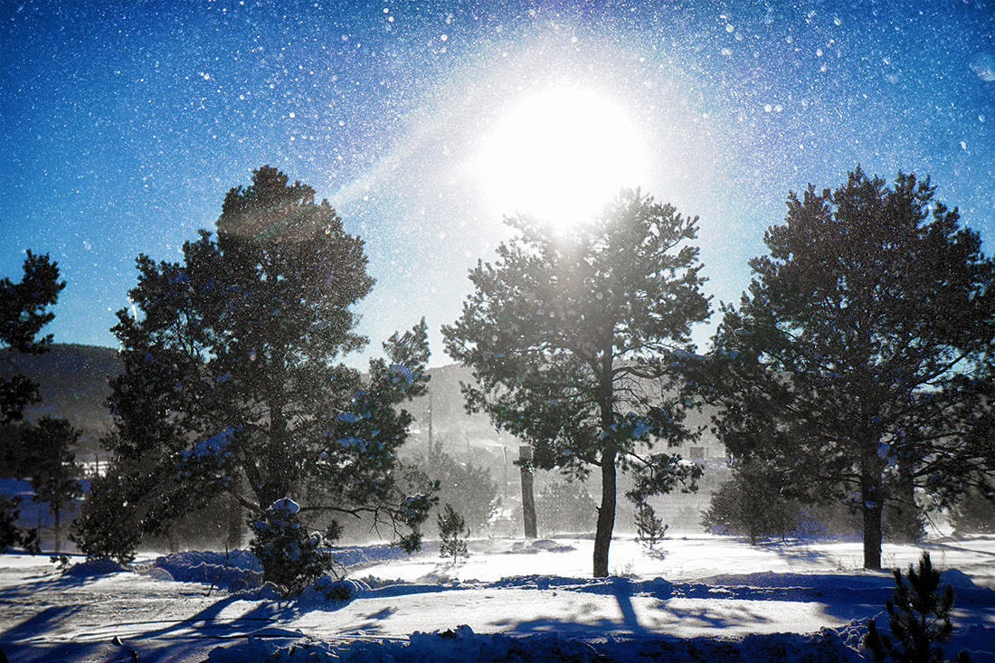 blowing snow in sunlight with pine trees