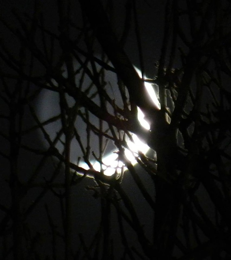 crescent moon through tree branches