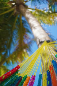 hammock strings attatched to palm tree