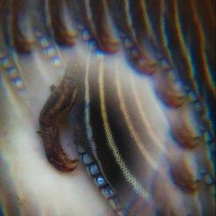 portrait of a dead lizard through kaleidoscope prism - arm and striped back and scaled side