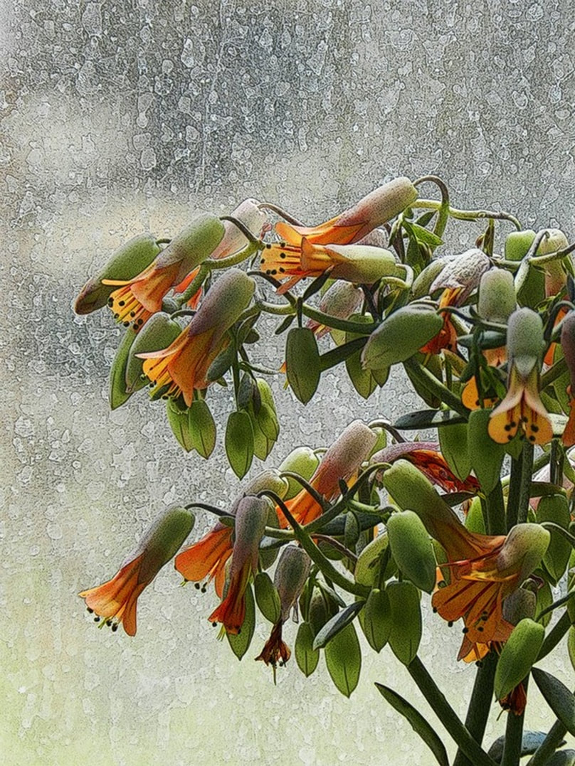succulent plant with orange flowers