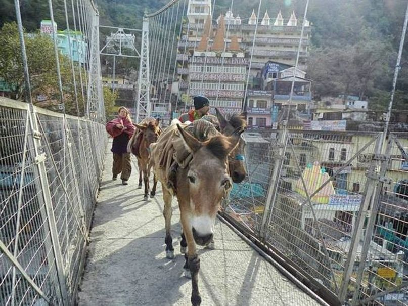 Passing a donkey on the footbridge above Ganges in Rishikesh