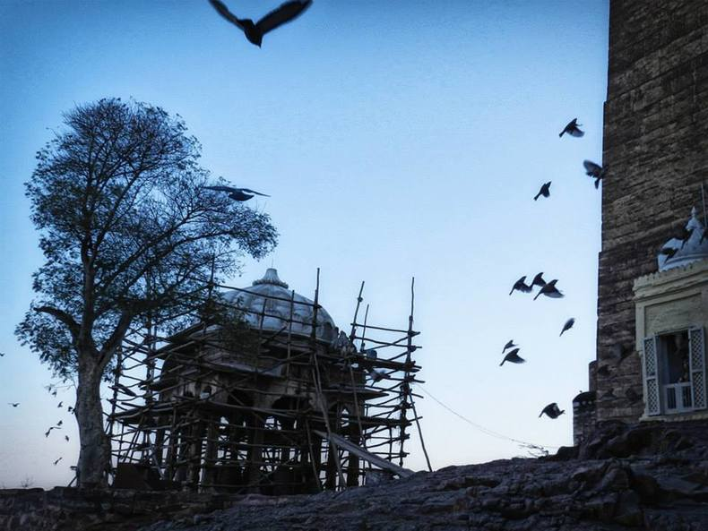birds fly around dome with wooden scaffolding