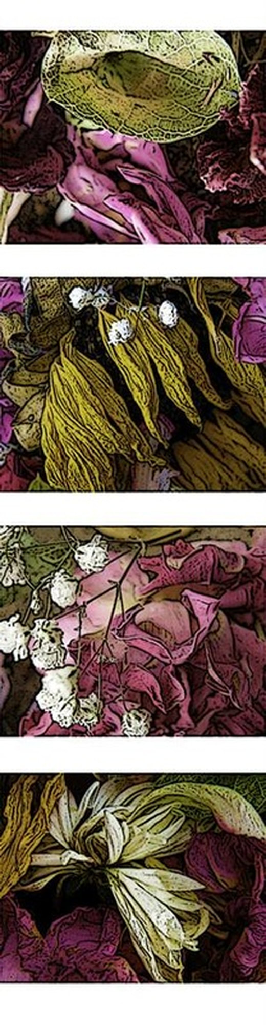 series of dried flower images